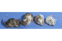 Animal Health Standards: Why Careful Selection and Harmonization Are Musts