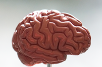 Colony Management is Key for Aged Neuro Models