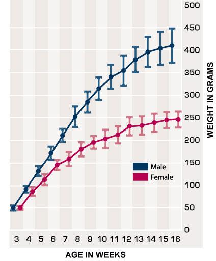 Sprague Dawley Rat Growth Chart Related Keywords Suggestions