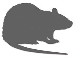Long Evans Outbred Rat Model