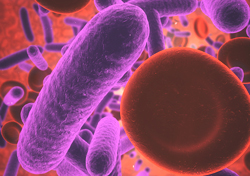 Microbiome Solutions