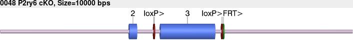10130cko-allele.png