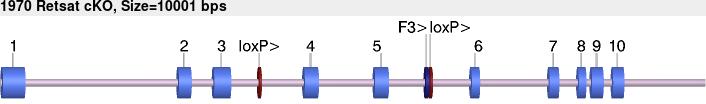 10312cko-allele.png