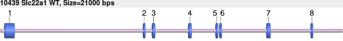 10439wt-allele.png