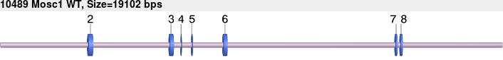 10489wt-allele.png