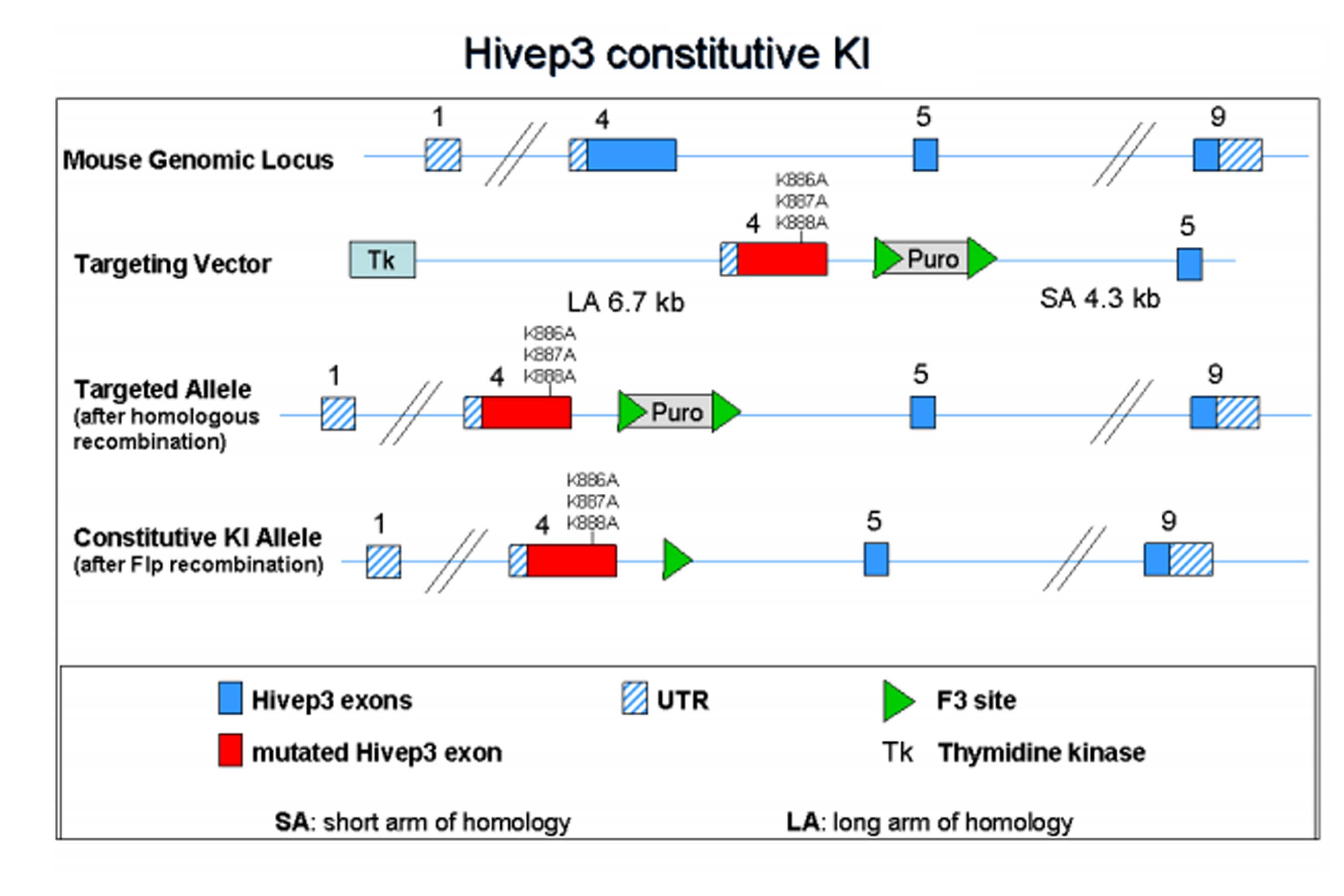 10494-hivep3.jpg