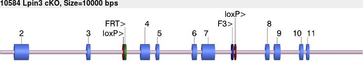 10615cko-allele.png