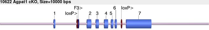 10622cko-allele.png