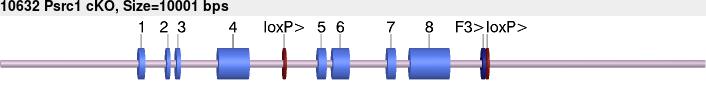 10632cko-allele.png