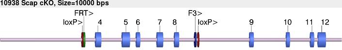 10938cko-allele.png