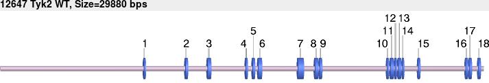 12647-wt-allele