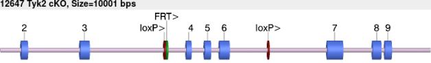 12647cko-allele