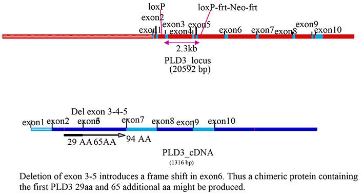 13774-Pld3_cKO-allele_diagram.jpg