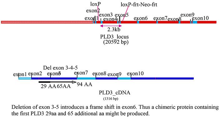 13775-Pld3_KO-allele_diagram.jpg