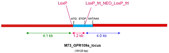 13799-Niacr1_KO-allele_diagram.jpg