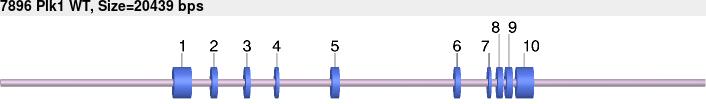 7896wt-allele.png