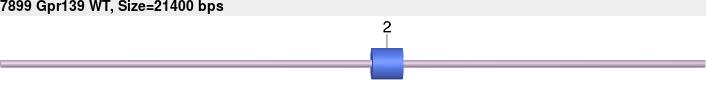 7899wt-allele.png