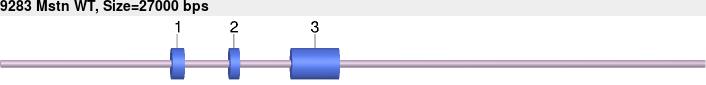 9283wt-allele.png