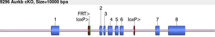 9296cko-allele.png