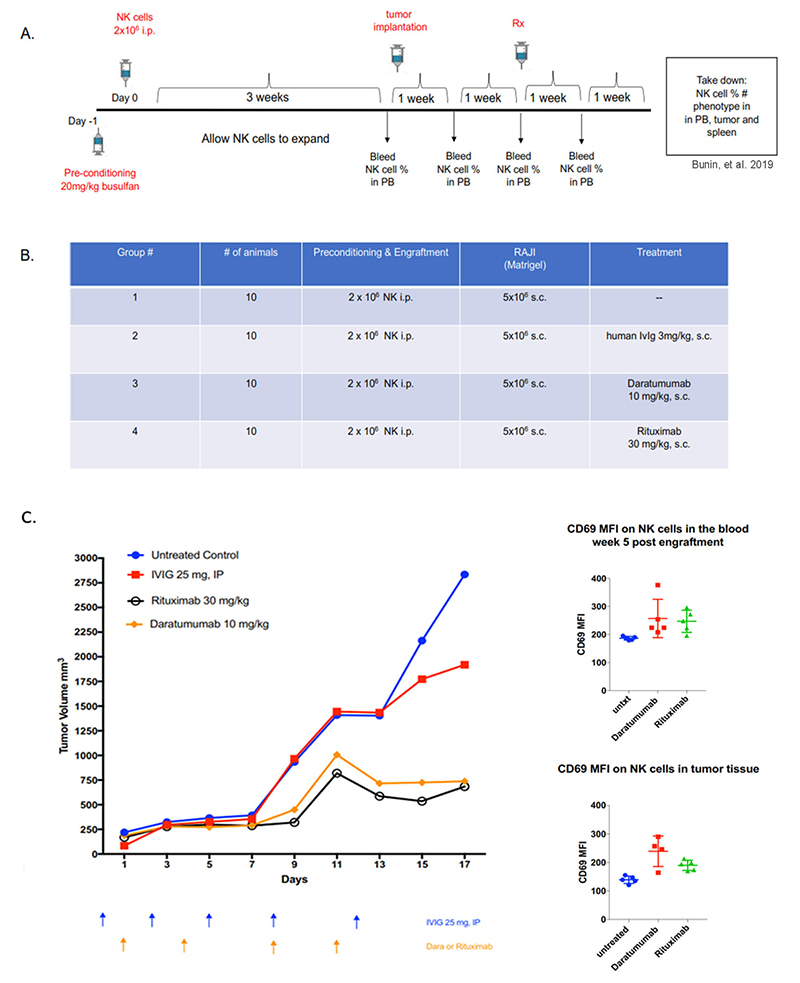 Human NK-cell engrafted hIL-15 NOG as a model for antibody-mediated NK cell depletion and ADCC