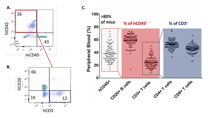 Flow cytometry analysis of human cell lineages in huNOG mice