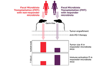 photo from Gut Microbiome and the Efficacy of Cancer Immunotherapy