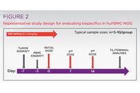 photo from Evaluating IO Bispecifics with PBMC-Humanized Mice