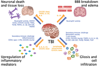 photo from The Long-Term Impacts of Traumatic Brain Injury