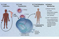 Improved Safety in CAR T Cell Therapy