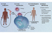 photo from Improved Safety in CAR T Cell Therapy