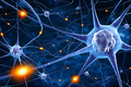 Animal Models and the Question of Adult Neurogenesis