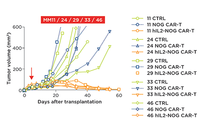 photo from The IL-2 NOG: An Optimal Model for the Testing of CAR T cell Therapy in Solid Tumors