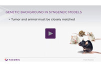 photo from Video: Genetic Background in Syngeneic Models