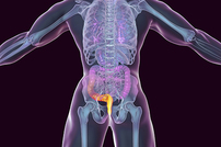 photo from FDA Issues Safety Alert on Investigational Use of Fecal Microbiota Transplantation