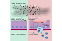 photo from IBD Severity and Fungi in Microbiome
