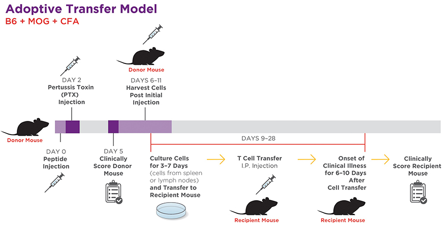 Generating EAE Mouse Models of Multiple Sclerosis | Taconic
