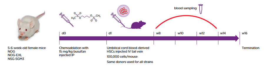 Figure 1: All strains were humanized via the same protocol and with the same HSC donors.