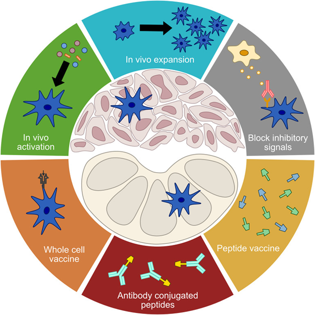 Figure 1: Approaches to manipulation of dendritic cells for immunotherapy.  From Gardner et al. Distributed under the Creative Commons Attribution License (CC BY).