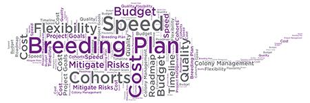 mouse model breeding plan word cloud