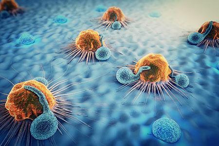cancer cells and lymphocytes
