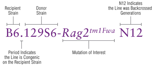 Congenic Mouse Nomenclature