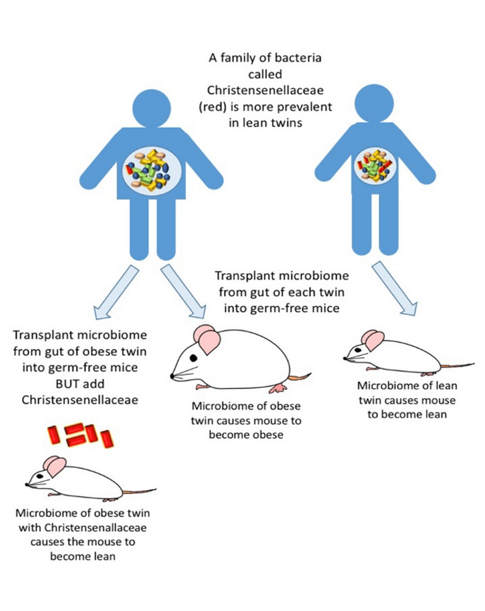 figure-1-complex-role-gut-microbiome.png
