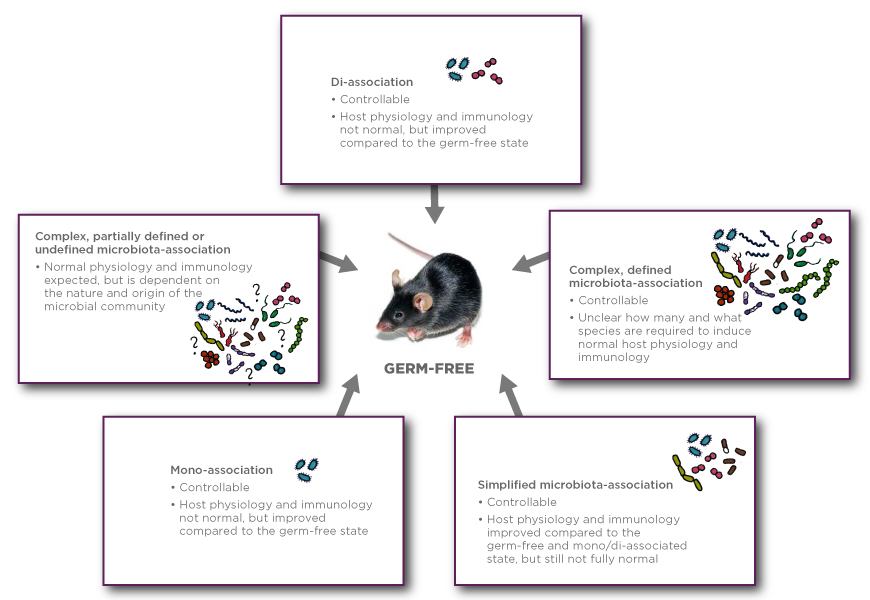 Foundational Gnotobiotics Concepts