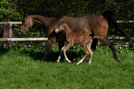 Horse mare and foal