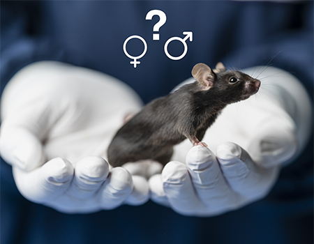 Mouse with male and female gender symbols