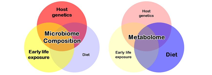 Differential effects of early life experience, genetics and diet on microbial diversity vs. metabolomics