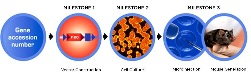 GEM Milestones