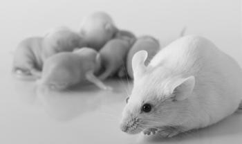 In vitro Fertilization