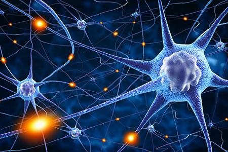 New Neurons