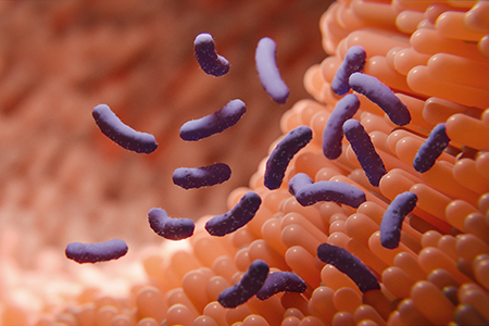 illustration of germs in the human intestines called microbiome